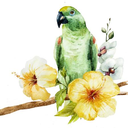 loros verdes: Imagen hermosa de la trama con un bonito loro acuarela