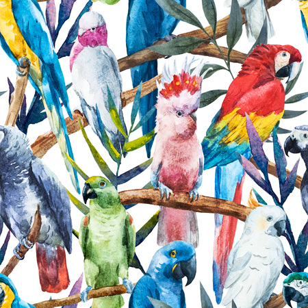 animales de la selva: Imagen hermosa trama con bonitos loros acuarela