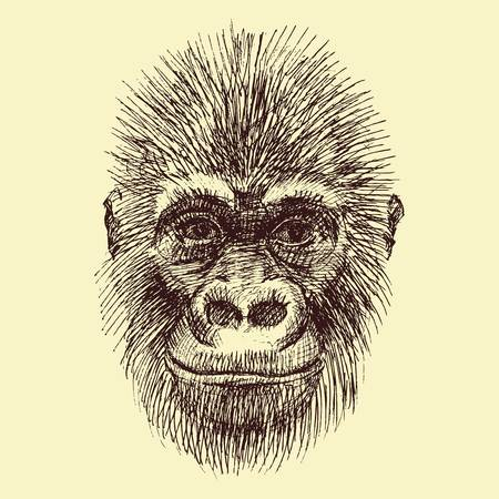 wild animal: Beautiful vector image with nice monkey with different elements