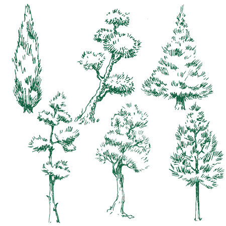 pine green: Beautiful image set with nice vector trees