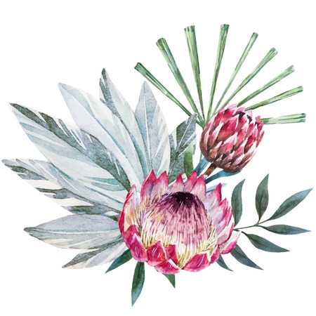 Beautiful vector image with nice watercolor tropical protea composition Ilustracja
