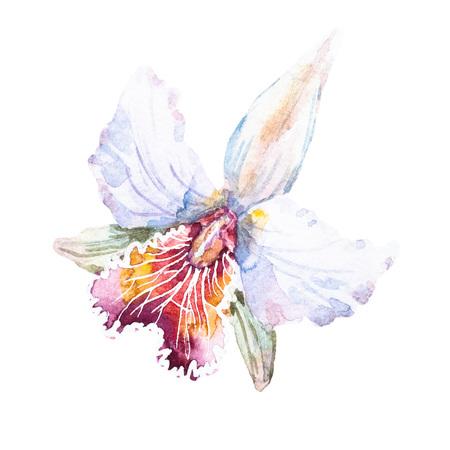 素敵な手で美しいラスター イメージ描画水彩ユリ
