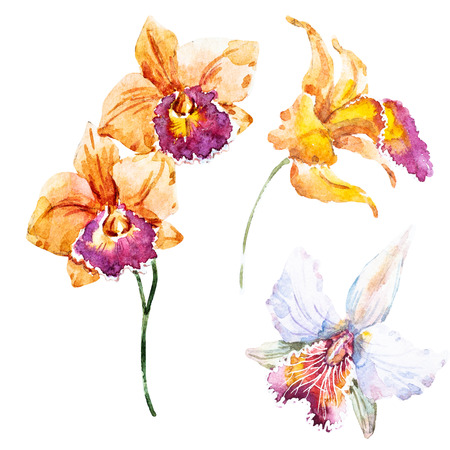 orchid isolated: Beautiful raster image with nice hand drawn watercolor lilies Stock Photo