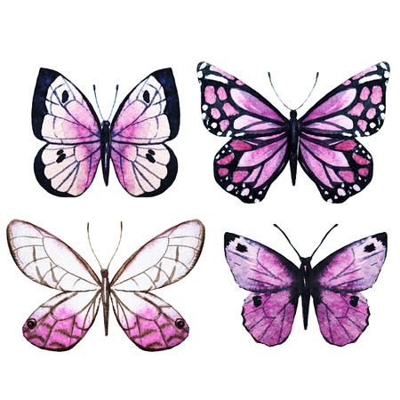 papillon: Belle image raster avec de beaux papillons aquarelle