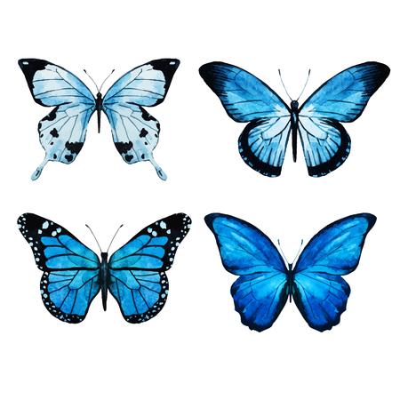 rosa negra: Imagen hermosa del vector con bonitas mariposas acuarela