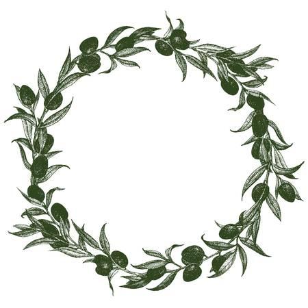 olivo arbol: Imagen hermosa del vector con una bonita corona de olivo dibujado a mano