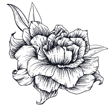etched: Beautiful vector image with nice hand-drawn flower