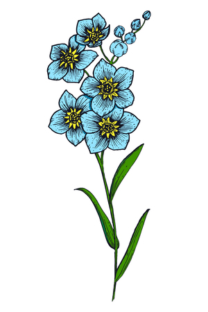 flower  hand: Beautiful vector image with nice hand-drawn flower