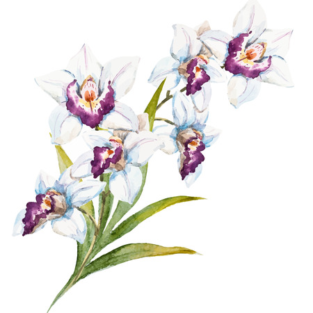 tera: Beautiful vecor image with nice watercolor orchid flowers Illustration