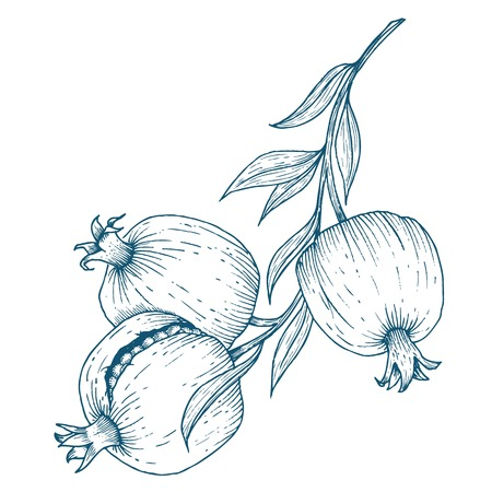 pomegranate juice: Beautiful vector image with nice hand drawn pomegranate fruit