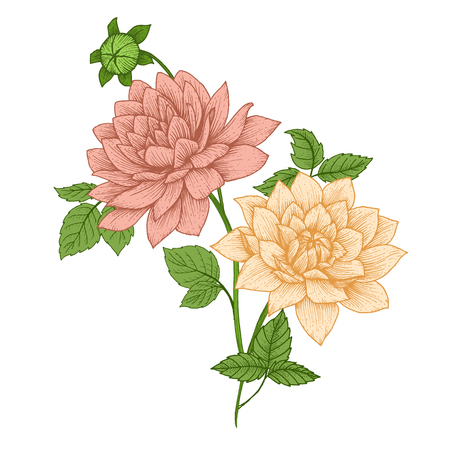 Beautiful vector image with nice vhand drawn flowers Illustration