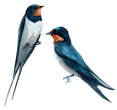 Beautiful vector image with nice watercolor swallow bird