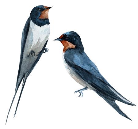 Beautiful raster image with nice watercolor swallow bird