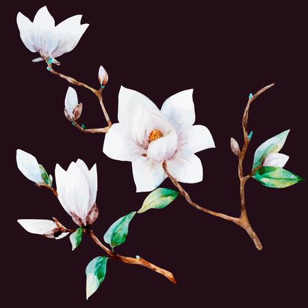 isolated flower: illustreated watercolor magnolia flowers Illustration