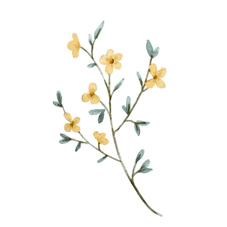 watercolour painting: illustrated watercolor yellow flowers