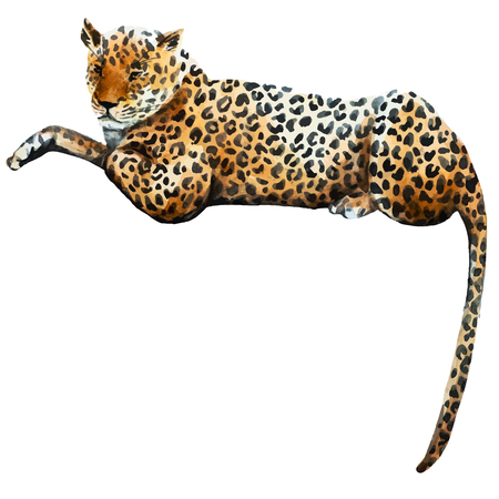 illustrated watercolor  leopard