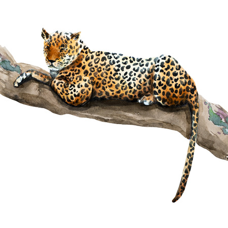 Beautiful raster image with nice watercolor hand drawn leopard