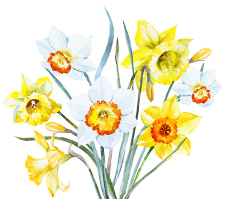 daffodil: Beautiful image with nice watercolor spring flowers Illustration