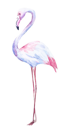 Beautiful image with nice watercolor hand drawn flamingo 矢量图像