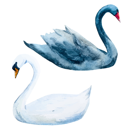 happy black people: Beautiful image with nice watercolor hand drawn swans