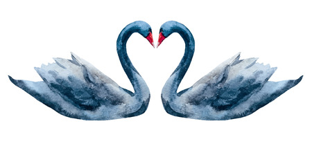 swans: Beautiful image with nice watercolor hand drawn swans