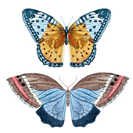 botany: Beautiful raster image with nice watercolor hand drawn butterflies