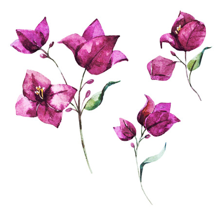 Beautiful raster image with nice watercolor bougainvillea flowers