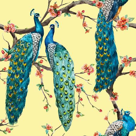 pavo real: Modelo hermoso del patr�n de la trama de la acuarela de la trama de pavo real Foto de archivo