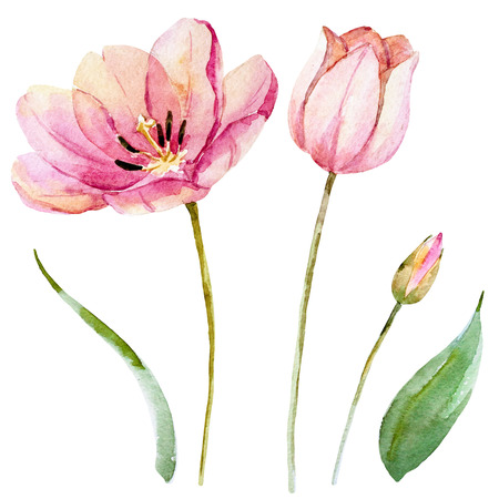 Beautiful raster image with nice watercolor hand drawn spring flowers