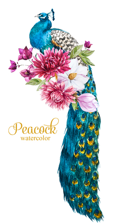 Beautiful image with nice watercolor hand drawn peacock with flowers Reklamní fotografie - 54127008