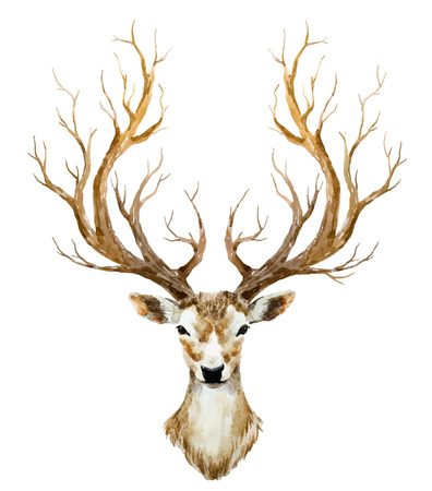 cuernos: Bella imagen con los ciervos agradable dibujados a mano de acuarela