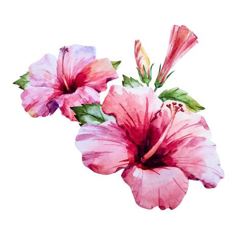 素敵な水彩画の手で美しいイメージにハイビスカスの花が描かれました。