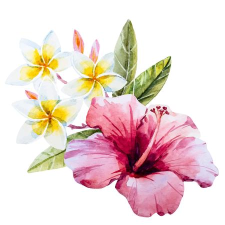 Bella immagine con fiore di ibisco disegnato bella mano acquerello Vettoriali