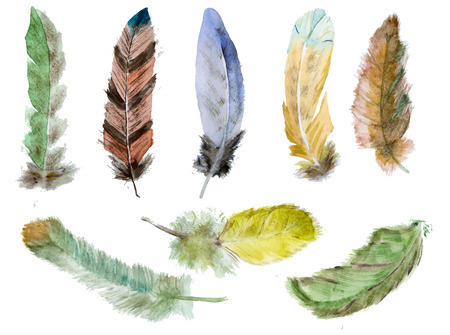 bright paintings: Beautiful image with nice watercolor hand drawn feathers Illustration