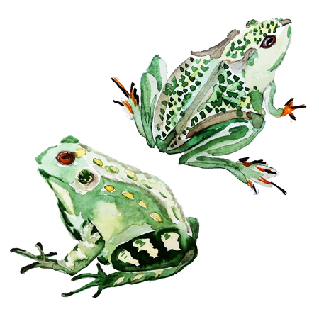 Beautiful image with nice watercolor hand drawn frog