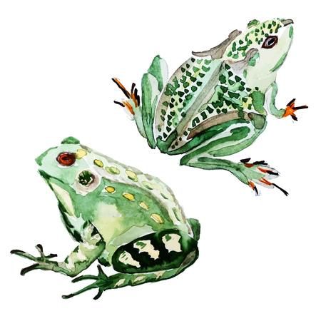 zoo amphibian: Beautiful image with nice watercolor hand drawn frog