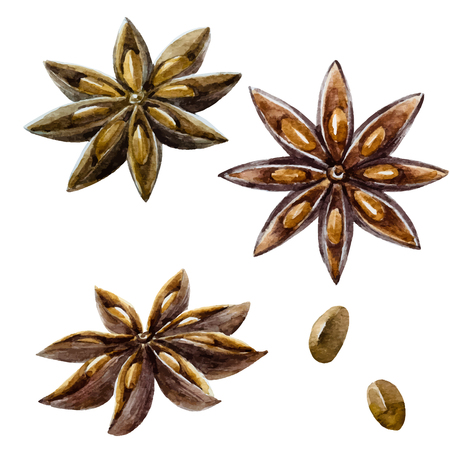 anise: Beautiful image with nice watercolor hand drawn spice anise
