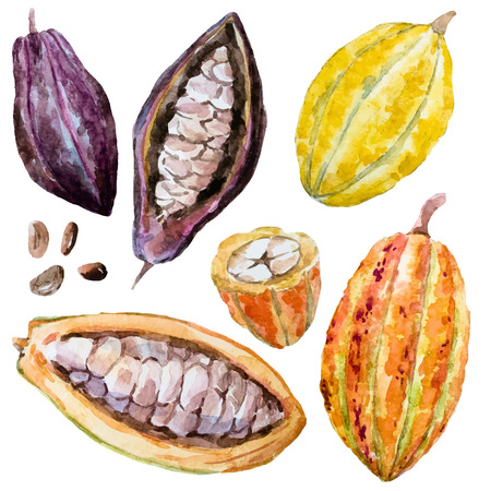 cacao: Beautiful image with nice hand drawn watercolor cacao beans
