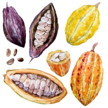 Belle image avec de belles fèves de cacao aquarelle dessinés à la main