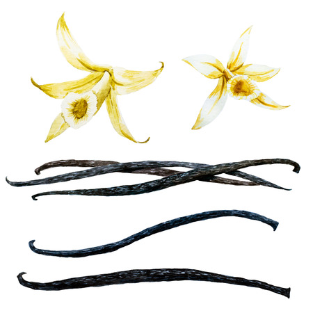 Hermosa imagen con buena vaina de vainilla y flor de la orquídea de la acuarela Foto de archivo
