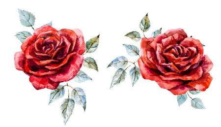 rosas rojas: Bella imagen con un bonito color rojo dibujado a mano de la acuarela se levantó