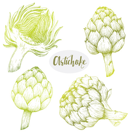 Beautiful image with nice hand drawn graphic artichoke Illustration
