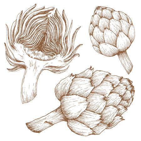 new plant: Beautiful image with nice hand drawn graphic artichoke Illustration