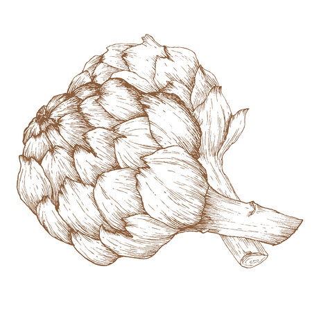 artichoke: Beautiful image with nice hand drawn graphic artichoke Illustration