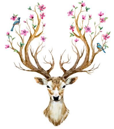 animales del bosque: Bella imagen con los ciervos agradable dibujados a mano de acuarela