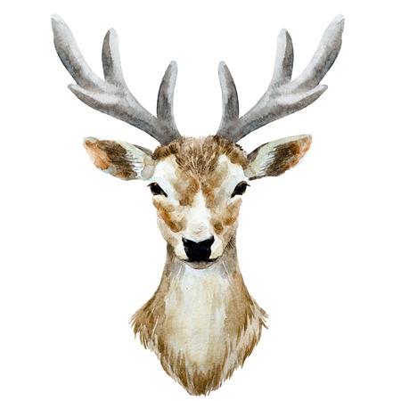 flower head: Beautiful image with nice watercolor hand drawn deer