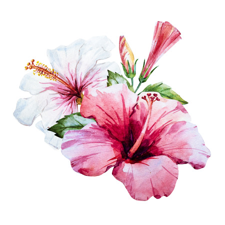 Beautiful image with nice watercolor hand drawn hibiscus flower