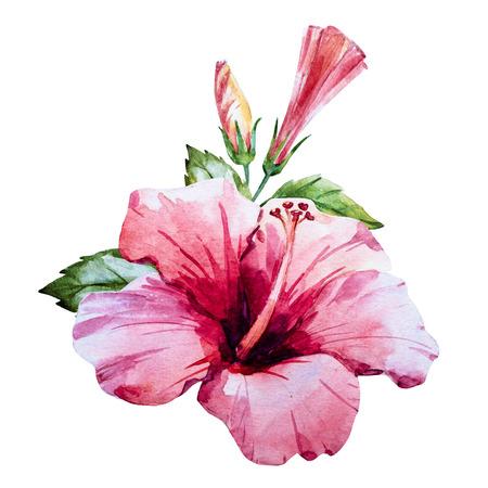 feuille arbre: Belle image tirée belle main d'aquarelle fleur d'hibiscus