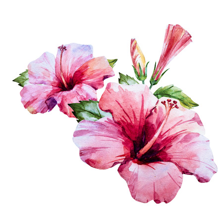 Beautiful image with nice watercolor hand drawn hibiscus flower Zdjęcie Seryjne - 55450077