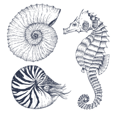 nautilus: Image with nice hand drawn graphic marine animals